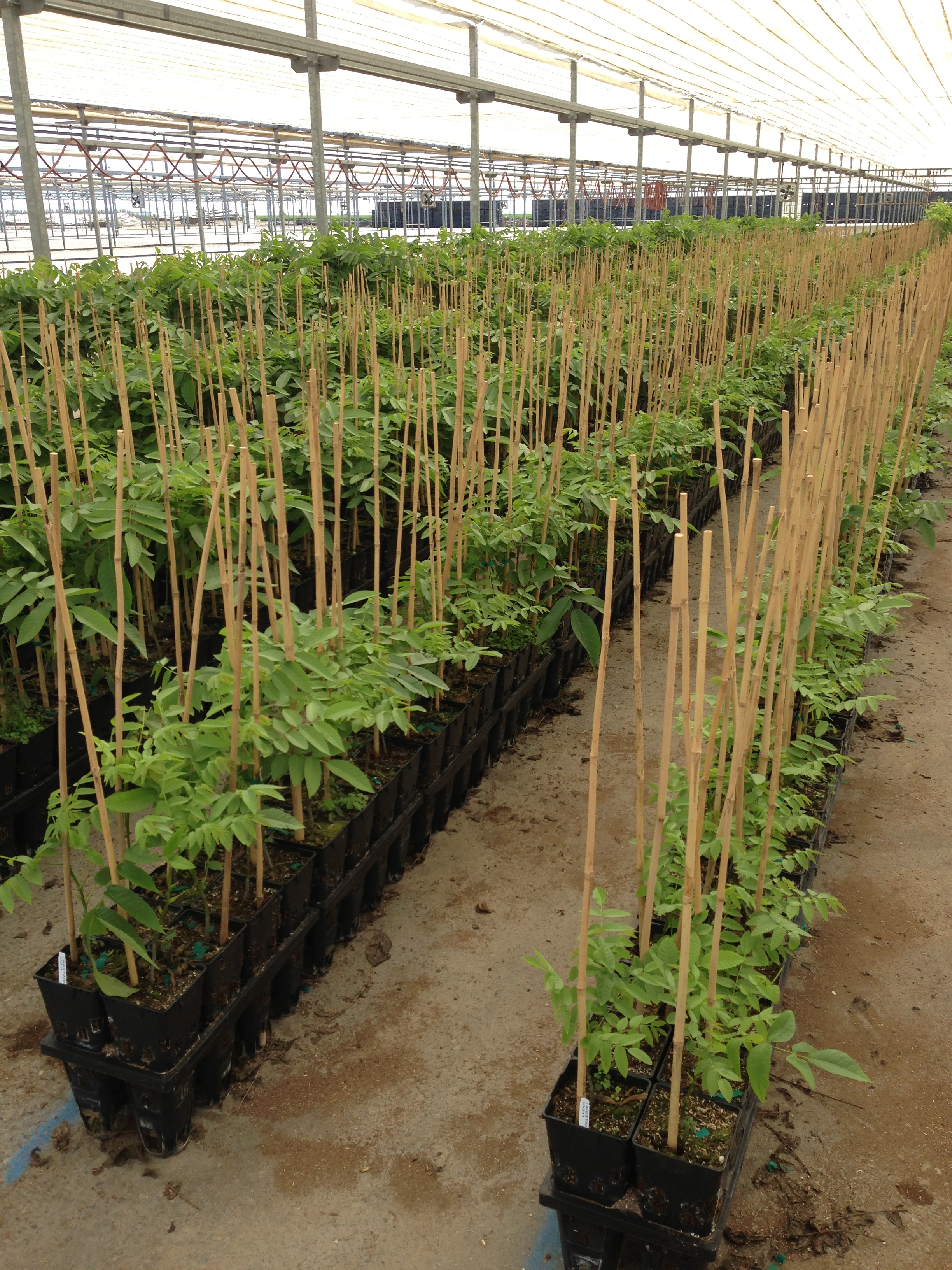 Orestimba nursery check out our roots for Soil 1 year mba